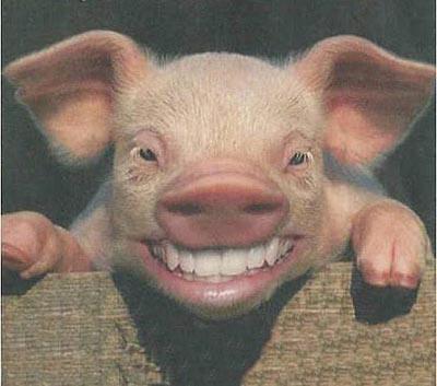 Cerdo despues del orgasmo